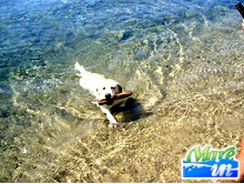 Spiagge e Itinerari - Spiaggia Dog Friendly - S.Teresa Gallura