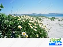 Spiagge e Itinerari - Spiaggia di Porto Pino