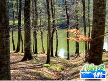 Assolutamente da vedere - La Foresta Umbra