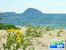 Lo sai che... - Fauna e Flora della Sardegna